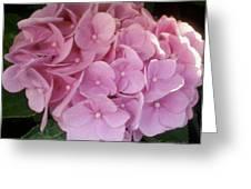 Fwc Beautiful Pink Hydrangea Greeting Card