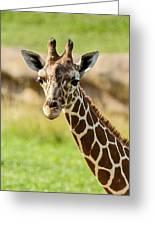 G Is For Giraffe Greeting Card
