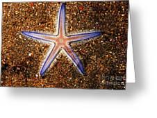 Galapagos Colorful Seastar Greeting Card