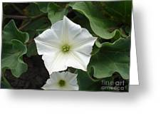 Galapagos Flower Greeting Card