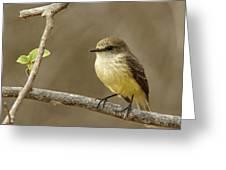 Galapagos Flycatcher - Isabela Island, Galapagos Greeting Card