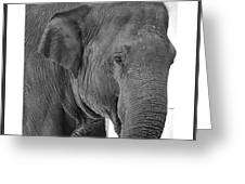 Gallery Image - Animals Greeting Card by Richard Reeve