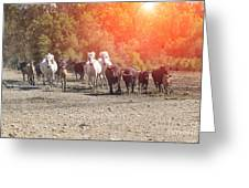 Galloping In Camargue Greeting Card