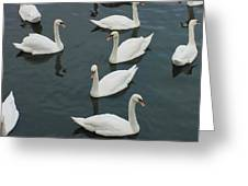Galway Swans On The Claddagh Greeting Card