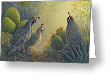 Gambel's Quail - Early Light Greeting Card
