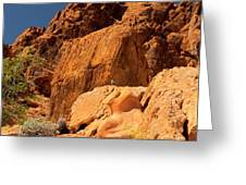 Gambels Quail In Profile Valley Of Fire Greeting Card