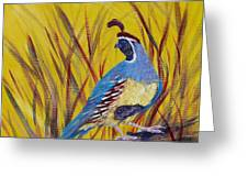 Gamble Quail Greeting Card by Summer Celeste
