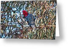 Gang Gang Cockatoo - Canberra - Australia Greeting Card