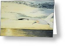 Gannet At Dusk Greeting Card