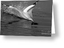 Gannet Northern Morus Bassan Setting On The Ocean Surface Greeting Card