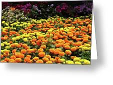 Garden Greeting Card