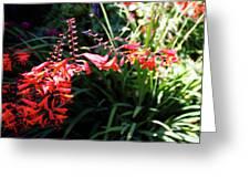Garden Fire Greeting Card