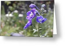 Garden Flower 4 Greeting Card