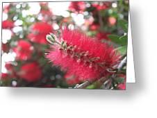 Garden Flower 6 Greeting Card