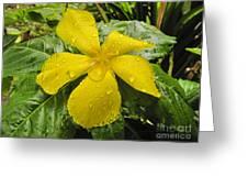 Garden Flower In Kwajalein Greeting Card