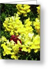 Garden Glory 3 Greeting Card