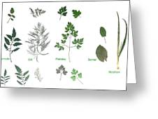 Garden Herbs Greeting Card