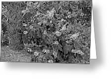 Garden Hydrangeas In Grayscale Greeting Card