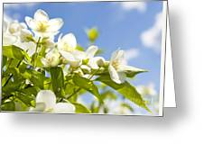 Garden Jasmin Greeting Card