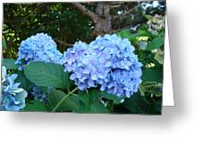 Garden Landscape Blue Hydrangeas Art Print Baslee Troutman Greeting Card