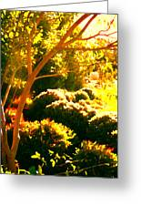 Garden Landscape On A Sunny Day Greeting Card