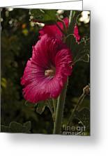 Garden Mayflower Greeting Card