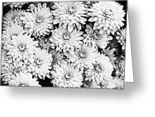 Garden Mums Greeting Card by Ryan Kelly