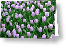 Garden Of Pink Tulips Greeting Card