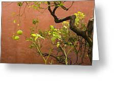 Garden Of The Alcazar Greeting Card