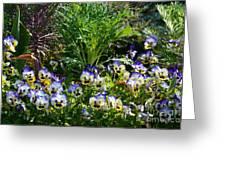 Garden Pansies Greeting Card