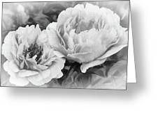 Garden Peonies Greeting Card
