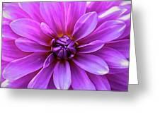 Garden Pink Greeting Card