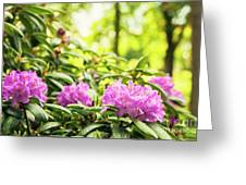 Garden Rododendron Bush Greeting Card