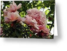 Garden Roses 2 Greeting Card