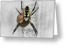 Garden Spider Greeting Card