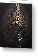 Garden Spider And Web Greeting Card by Tamyra Ayles