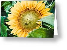 Garden Treasure  Greeting Card