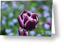 Garden Tulip With Rain Drops On A Spring Day Greeting Card
