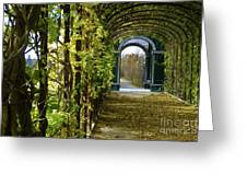 Garden Walkway Greeting Card