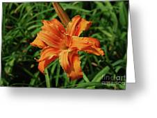Garden With A Blooming Double Daylily Flowering Greeting Card