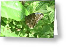 Garden With A Blue Morpho Butterfly With Wings Closed Greeting Card