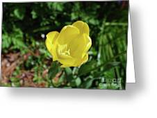 Garden With Beautiful Flowering Yellow Tulip In Bloom Greeting Card