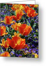 Garden With Blooming Yellow And Red Tulip Blossoms Greeting Card