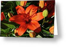 Garden With Lily Buds And A Blooming Orange Lily Greeting Card