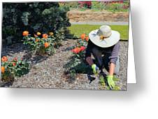 Gardener Pulling Weeds  Greeting Card