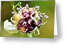 Garlic Top Greeting Card