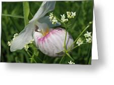 Garnished Showy Lady Slipper Greeting Card