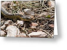 Garter Snake On The Trail In The Pike National Forest Of Colorad Greeting Card