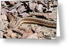 Garter Snake Greeting Card