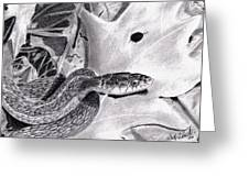 Garter Snake Greeting Card
